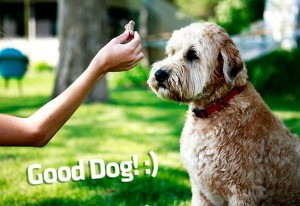 positive-reinforcement-dog-training