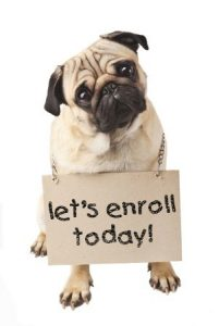 enroll-dog-training-miami