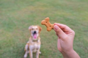 Food lures can help teach your dog a behavior, but it's important your dog doesn't become dependent. Visit our website to learn how to use food lures.